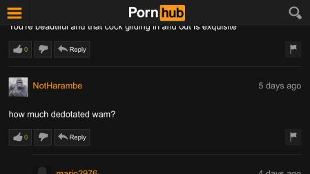 Comment on a pornography website